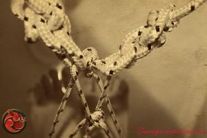 köle Bondaji ve Teslimiyeti